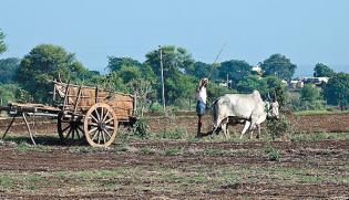 Disequilibrium | India's Agrarian Crisis