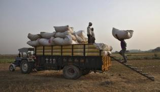 India To Reinstate Wheat Import Duty After Big Deals
